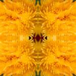 Yellow-Flower-02