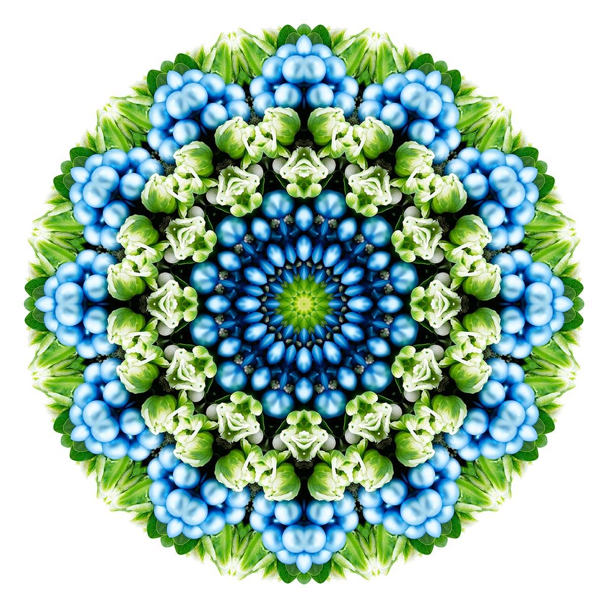 Flora Fractalis Sacred Geometry Javier Gomez Photography
